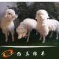 仿真绵羊模型皮毛动物仿真绵羊商场活动展示摆件